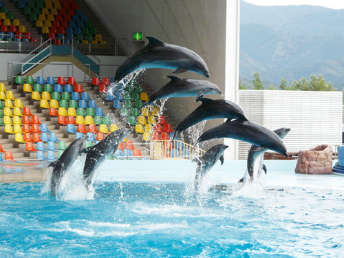 イルカ イルカジャンプ!! 流線型でキレイ!! クジラジャンプ!! 本当...  パンダイ・・・
